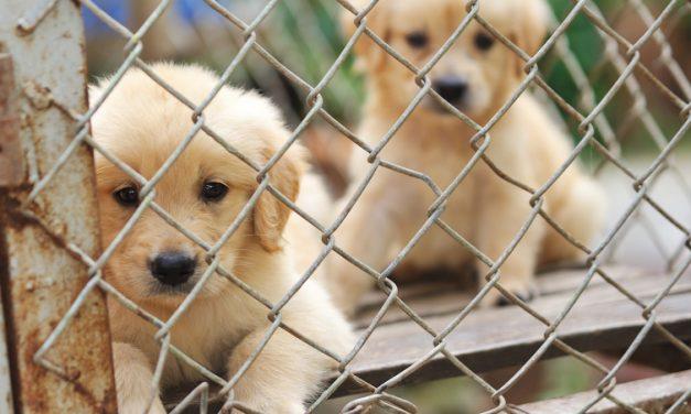 Tierpaten für 2 Stunden Flug gesucht! Große Hilfe, kleiner Aufwand – für Sardiniens Hunde!
