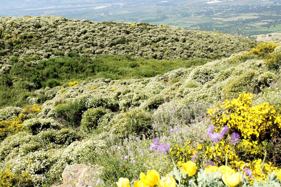 Sardiniens zweiter Frühling