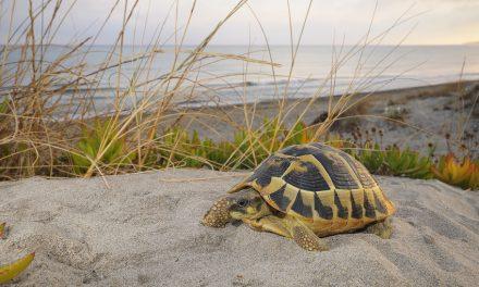 Schildkröten und Sardinien