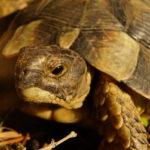 Schildkröten auf Sardinien geben zu denken