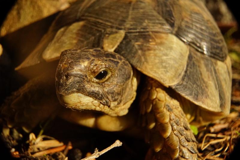 Schildkröten auf Sardinien und die Sexismusdebatte